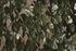 Treillis osier extensible a feuilles